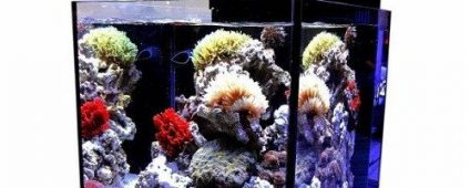 Aqua Medic Blenny Advanced Nano Reef Tank 76L
