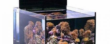 Aqua Medic Blenny Nano